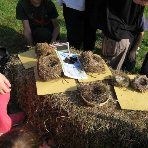 bambini e nidi a pesei